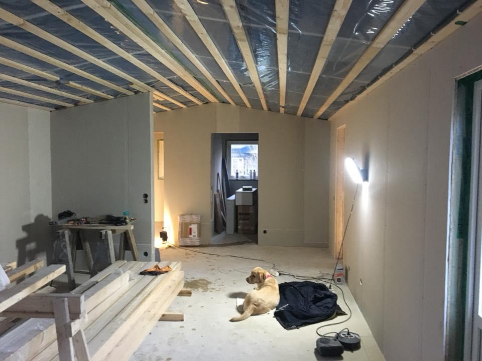 Ledarhunden Chanti ligger bland byggmaterial i ett pågående byggarbete inomhus. Man ser väggarna i vitt utan tapeter och i taket syns isolering halvtäckt av brädor.